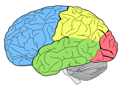 What Does a Criminal's Brain Look Like?