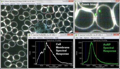 Hyperspectral Imaging of Gold Nanoparticles in Live Blood Cells