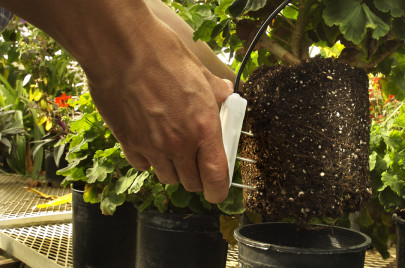 Three-in-One Soil Sensor Boosts Yield in Greenhouses