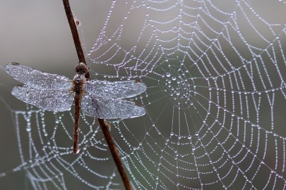 How Strong is Spider Silk?