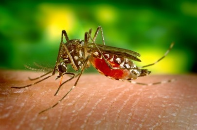 How to Deter Mosquitoes - With Your Blood