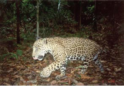Linking Wildlife Sanctuaries Attracts Funding for New Belize Project